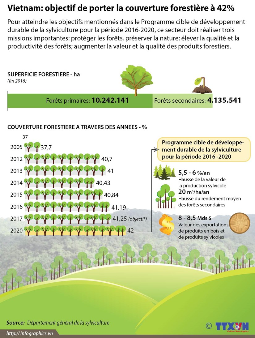 Vietnam: objectif de porter la couverture forestiere a 42% hinh anh 1