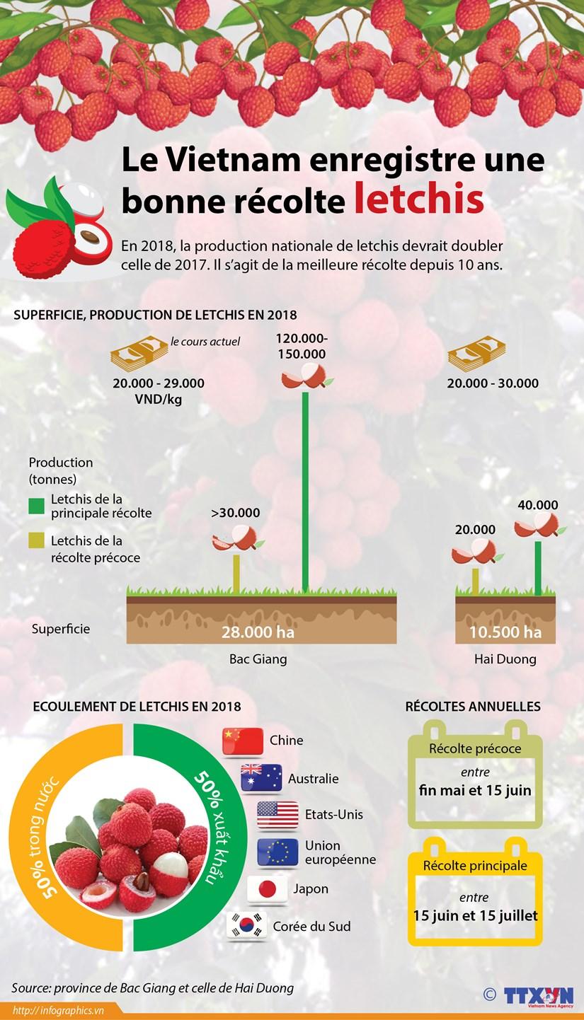 Le Vietnam enregistre une bonne recolte de letchis hinh anh 1