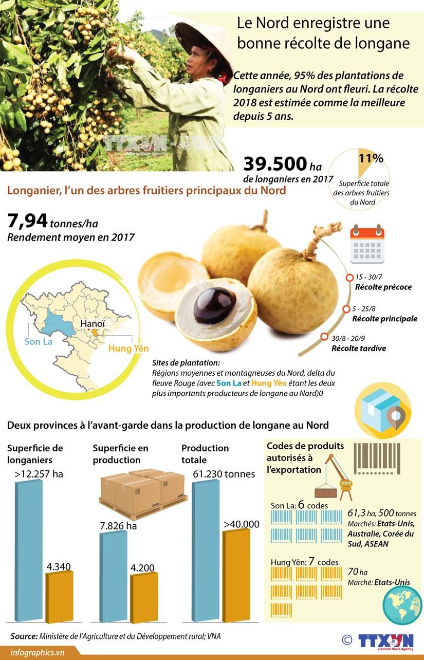 [Infographie] Le Nord enregistre une bonne recolte de longane hinh anh 1
