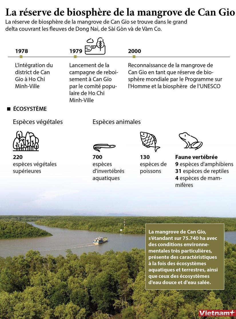 La reserve de biosphere de la mangrove de Can Gio hinh anh 1