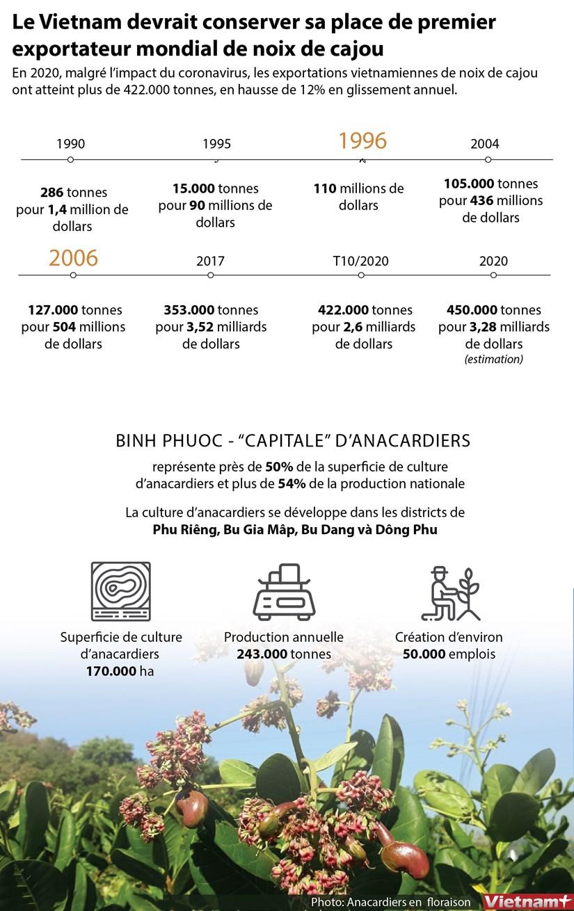 Le Vietnam devrait conserver sa place de premier exportateur mondial de noix de cajou hinh anh 1
